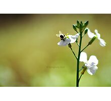 Bumble Bee Butt Photographic Print
