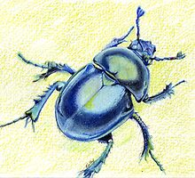 Blue Beetle Nature Art by Ela Steel