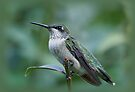 Hummingbird Close-Up by Sandy Keeton