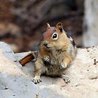 Gray Mantle Squirrel by Gina J