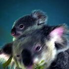 mum an baby koala by warren dacey