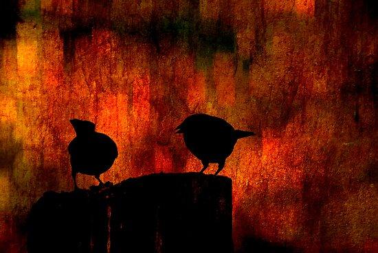 Hot Gossip by Robin Webster