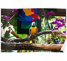 Colorful bird on a branch inside the Jurong Bird Park in Singapore Poster
