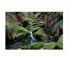 Tranquility On The Milford Track Art Print