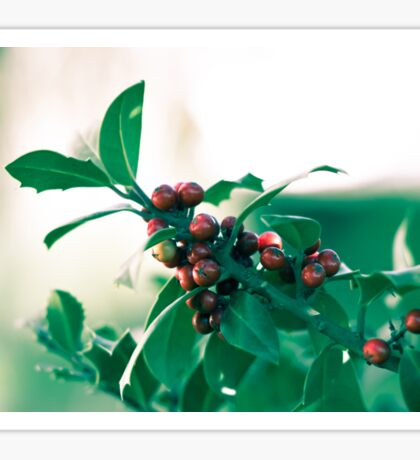 Holly bush with red berries Sticker