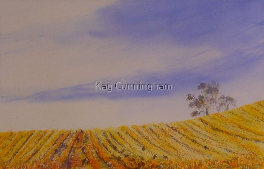 Vines of The Clare Valley by Kay Cunningham