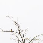 Barn Swallow in Tree by PopPopPhoto