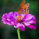 Sweet Purple by Briar Richard