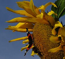 Red Admiral, Bumble Bee & Sunflower by wiggyofipswich