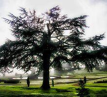 Tree Dreams by John Dalkin