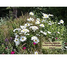 FLOWERS OF THE FIELDS   BIBLE TEXT/BESPOKE/NO TEXT Photographic Print