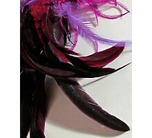 Colored Feathers Photographic Print