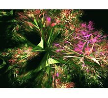 Fairyland in Spring Photographic Print