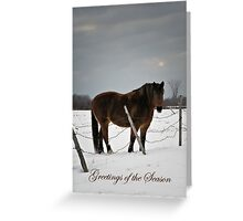 Horse in Winter (holiday greeting card) Greeting Card