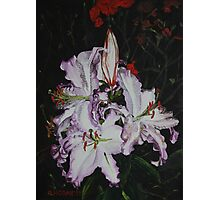 Night Time Lilies Photographic Print