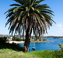 South Head -  The Palm by miroslava