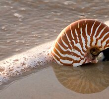 Nautilis on the Beach Sunshine Coast Qld Australia by Beth  Wode
