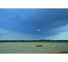 bird on the lake Photographic Print