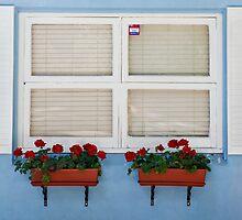 353 - 365 Window frame  by Nina  Matthews Photography