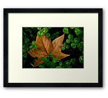 245 - 365  Clovers  Framed Print