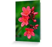 Become Happy Greeting Card