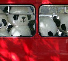 panda power by Janine Matheson