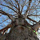 the alien tree by Loreto Bautista Jr.