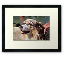 Kelly The Australian Shepherd Framed Print