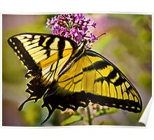 Swallowtail Beauty Poster