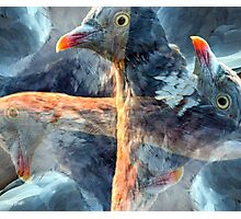 Designs Inspired By Nature: Wild Pigeon Photographic Print