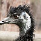 Emu -  Portrait by DPalmer