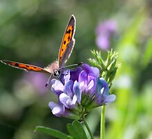 Smell the Flowers Small Copper by Jo Nijenhuis