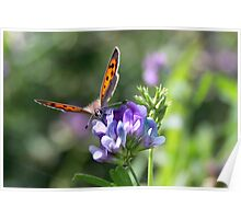 Smell the Flowers Small Copper Poster