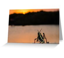 Hopper at Sunset Greeting Card