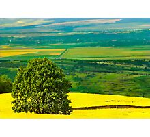 Tree in yellow field Photographic Print