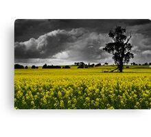 Stormy Canola Fields Canvas Print