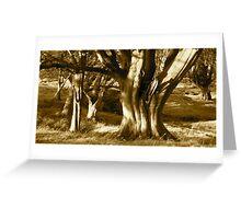 The Beech Wood Greeting Card
