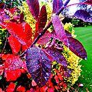 Dew on Leaves by Nik Watt