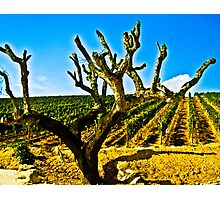 Cork for the Wine! Photographic Print