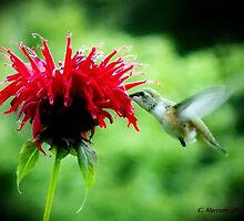 Sweetest Nectar by Cmarcotte