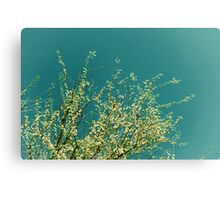 Summer Breeze 135c Canvas Print