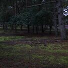 Brownsea Island Tree Clearing by mdench