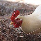 Brownsea Island Chicken by mdench
