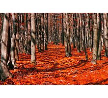 Bloody forest Photographic Print