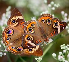 Beautiful Pair by Brent McMurry