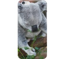 Koala Bear iPhone Case/Skin