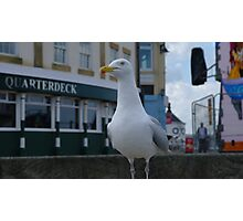 The Happy Seagull Photographic Print