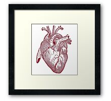 Anatomically Correct Heart Framed Print