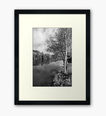 Lake Birch Trees Framed Print