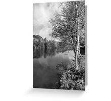 Lake Birch Trees Greeting Card